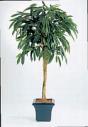 Искусственные растения Лонгифолия зонтичная широколистная