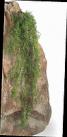 Искусственные растения Аспарагус ампельный