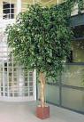 Искусственные растения фикус гигантский