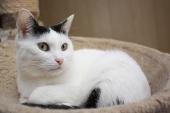 Кошка Оливка ищет самых лучших хозяев
