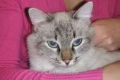Кошка Паня