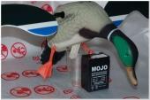 Комплект чучал уток Baby Mojo Duck
